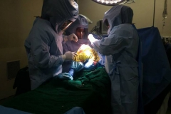joint replacement training